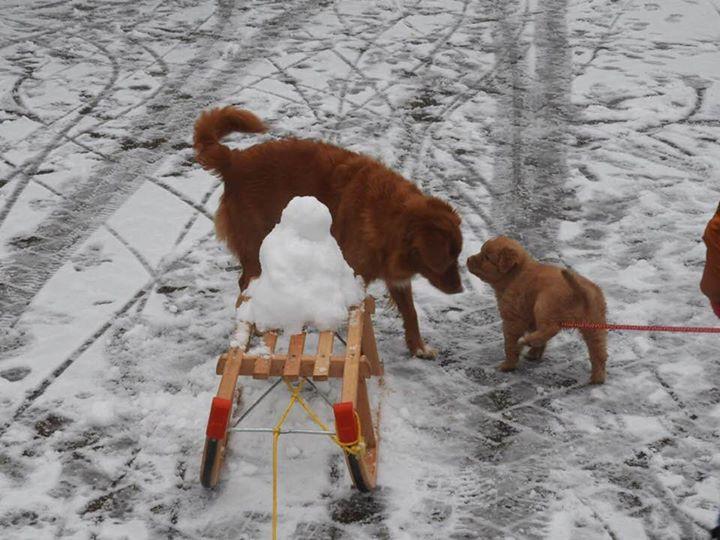 Eerste sneeuw!