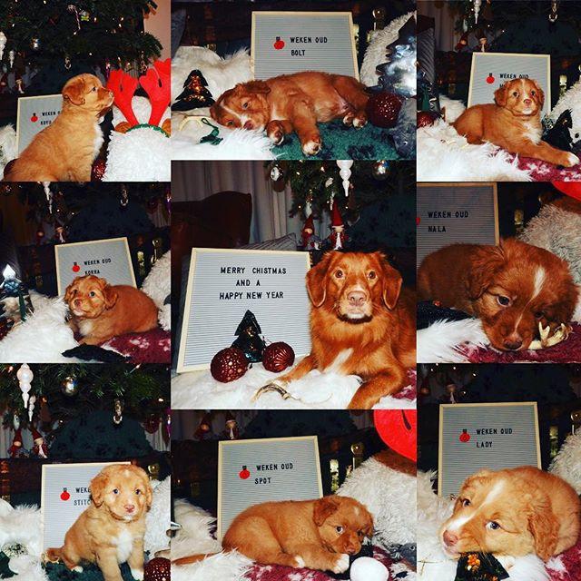 Pups 6 weken oud