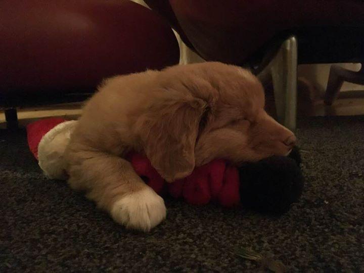Slapen op de kerstman, knappe Stitch