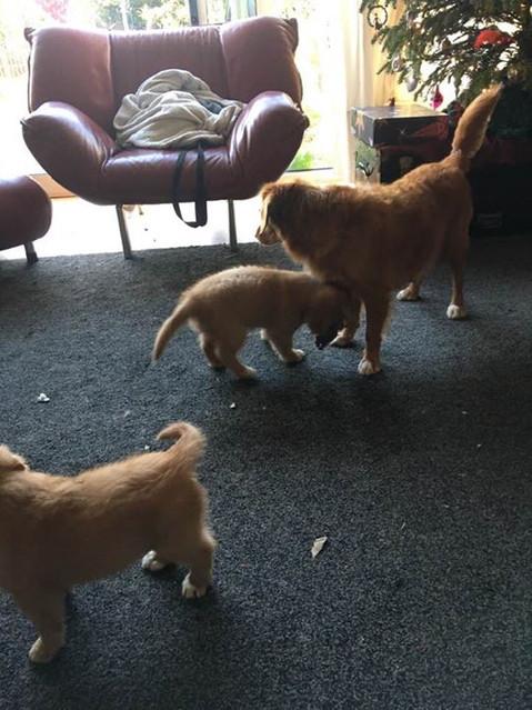 Spelen in de woonkamer