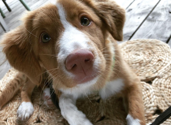 boop the nose