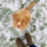 Do you wanna build a snowdog_ ❄️ #furrym