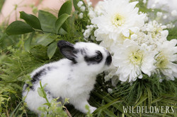 Easter_Sunday_At_Menagerie_Farms-bunny