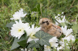 Easter_Sunday_At_Menagerie_Farms-chicken