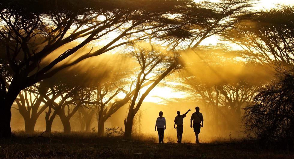 ker&downey_joy's camp_bush walk_go2africa.jpg