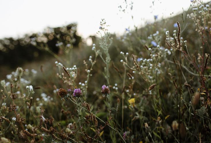 Wildflowers in Piedmont, Langeh Region