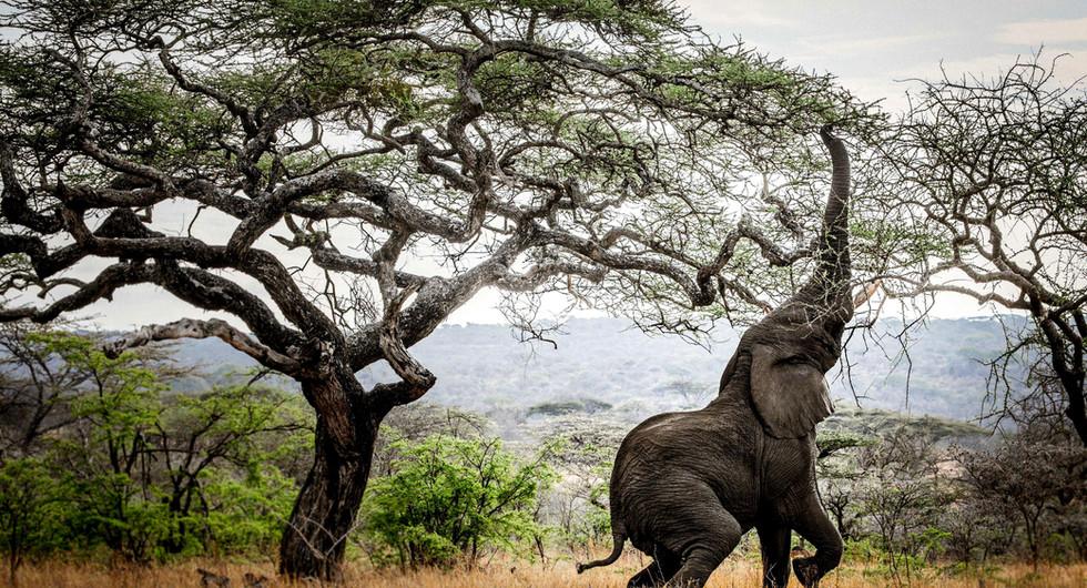 classic portfolio_mwiba lodge_wildlife_go2africa.jpg