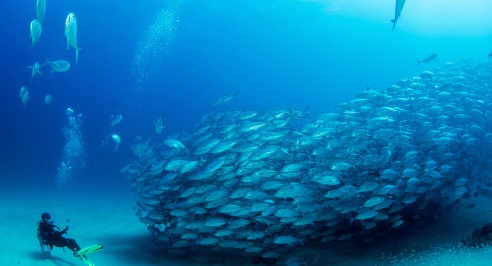 Diving experience in Baja California, Me