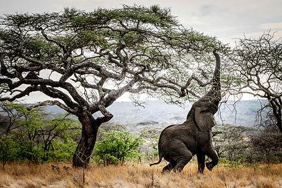 mwiba lodge wildlife_1.jpg