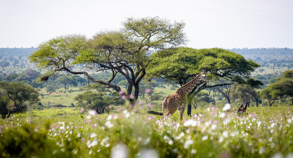 sanctuary retreats_swala_game drive_go2africa.jpg