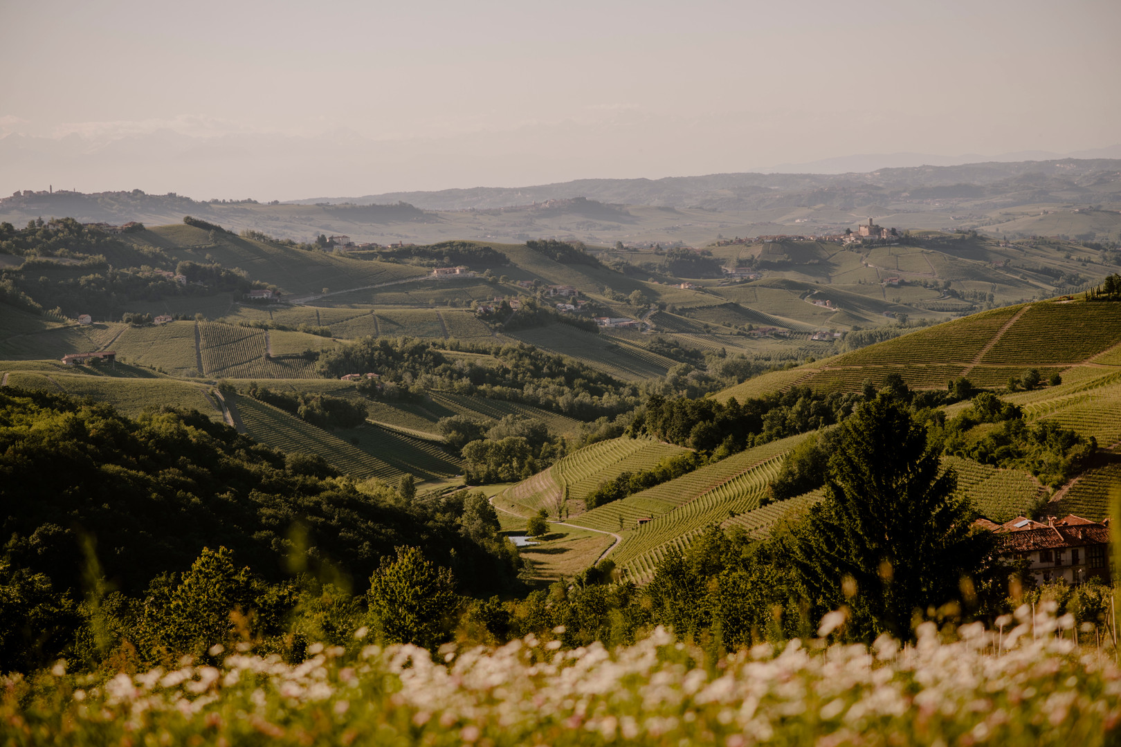 Local vineyards in Piedmont, Langeh Region