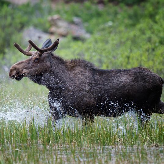 Flat Creek Ranch Wildlife