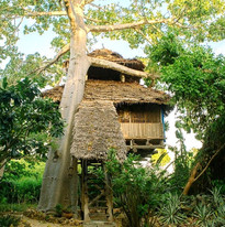 Chole_Minji_Treehouse