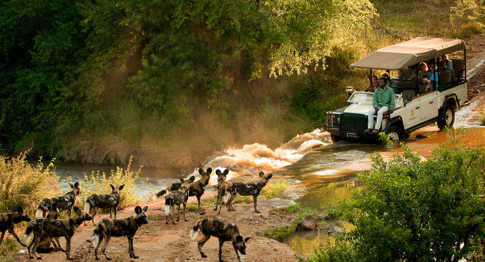 morukuru family_madikwe game reserve_game drive with wild dogs_go2africa.jpg