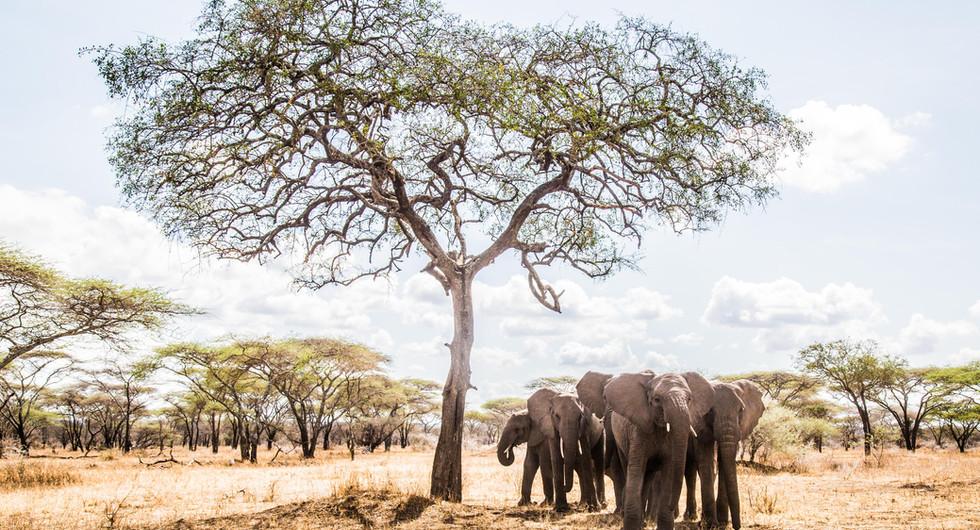 classic portfolio_mwiba lodge_wildlife_go2africa (2).jpg
