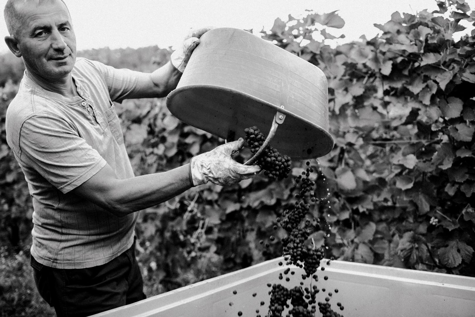Local wine producer in Piedmont, Langeh Region