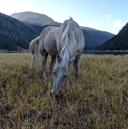 Flat Creek Ranch Horseback