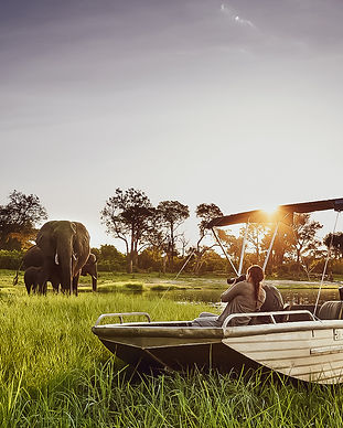 sanctuary retreats_chobe chilwero_wildlife_go2africa.jpg