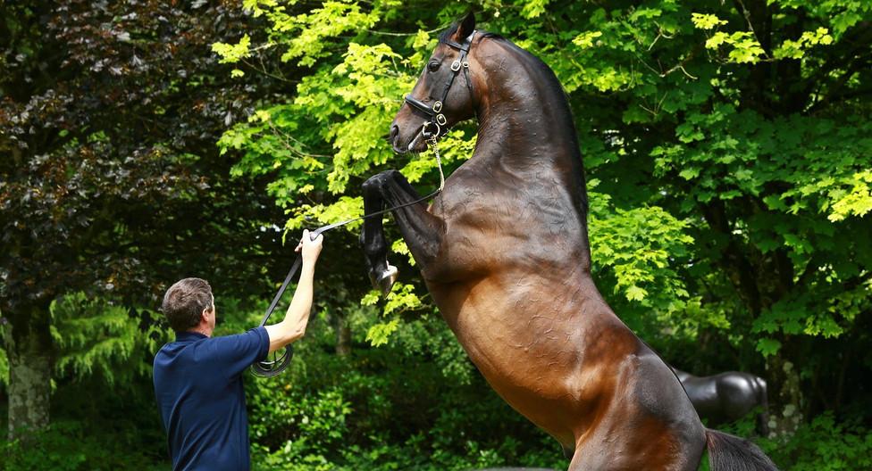 explore coolmore stud farm pedigree horses.jpeg