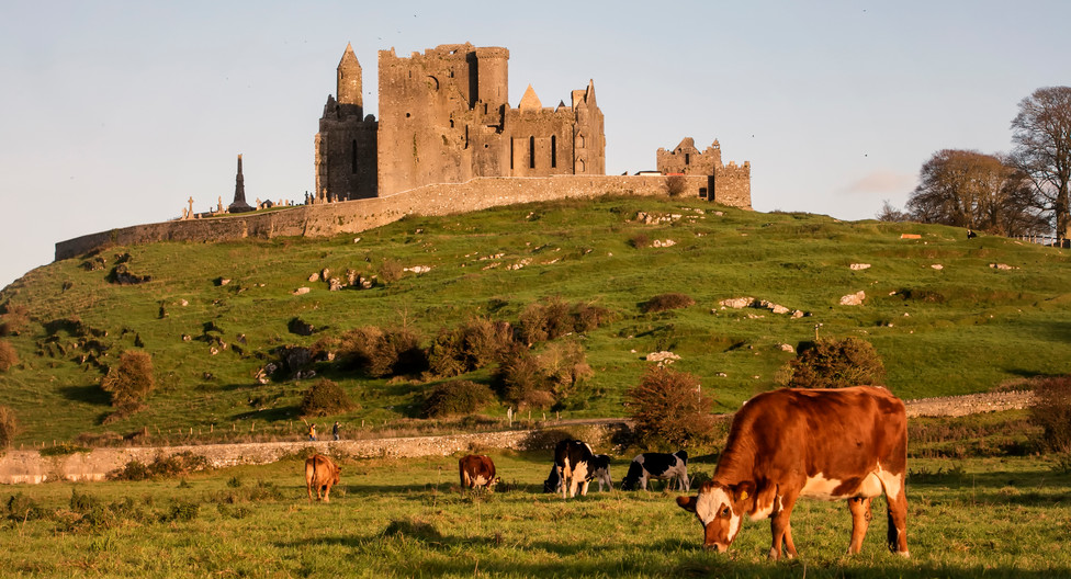 cows grazing below the rock of cashel, co tipperary_master.jpeg