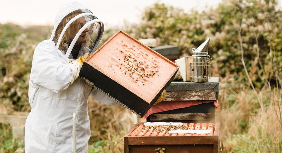 hero slider - brookfield farm honey bees.jpeg