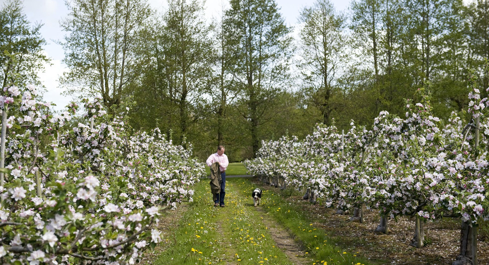 farm tour the apple farm.jpeg
