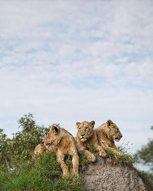 singita_lebombo lodge_wildlife_go2africa (2).jpg