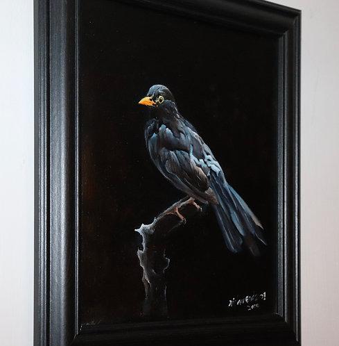 Framed common blackbird
