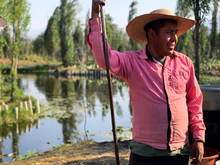 Arca Tierra: Connecting Xochimilco's Peasant Farmers with Mexico City's Gourmands