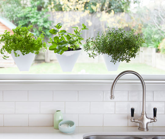 vertical gardens, ktichen gardens, herb gardens, herbs, planters, window planters, apartments, small spaces, pots, suction cups, recycled