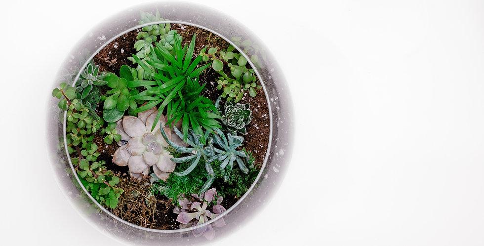 DIY Mini Terrarium Kit