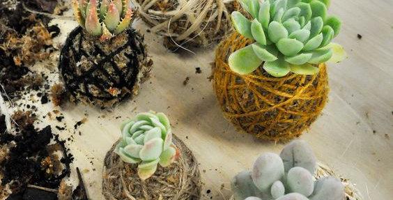 Kokedama DIY Kit - With Plant