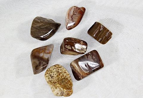Petrified Wood - Each