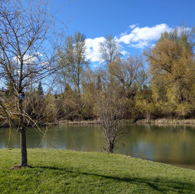 No14  Tranquility at West Frazer Timber Park