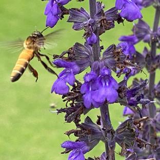 Abundance Flight
