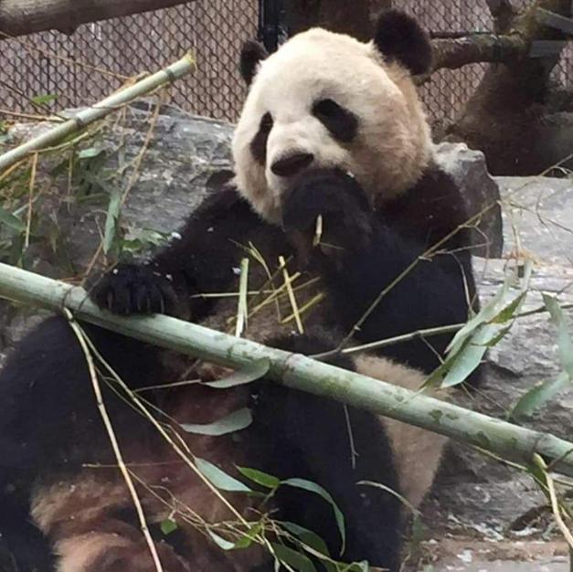 No.35 Panda Meal