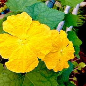 No.13 Sunny Blooms at the Backyard