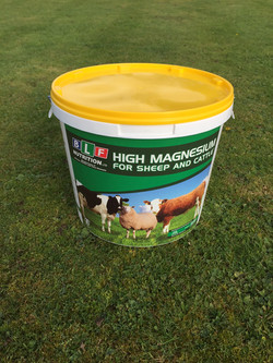 Sheep And Cattle High Mag