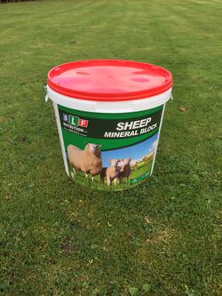 Sheep High Protein Block