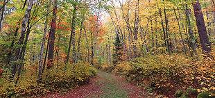 Taconite Trail.jpg
