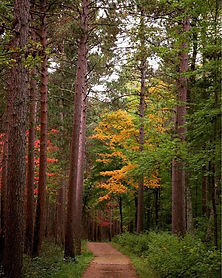 Chipperwa Forest Pic.jpg