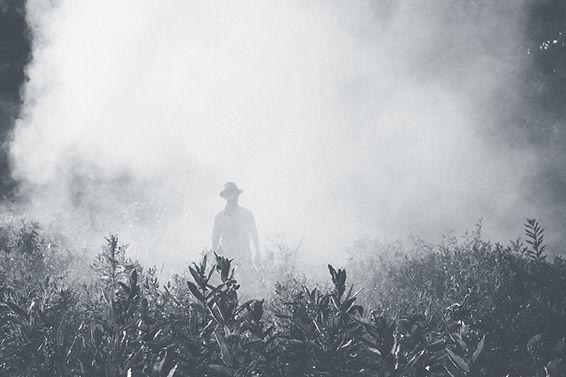 Homme environné de fumée et d'une végétation luxuriante