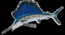sailfish_edited.png