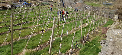 SLOG orchard.jpg