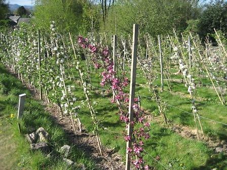 SLOG Orchard Bloom.jpg