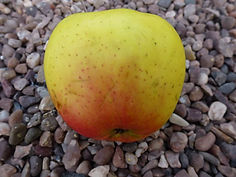 Silverdale Shore apple.jpg