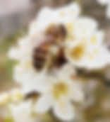 label bee.jpg