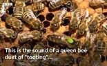 Queen Toot.png