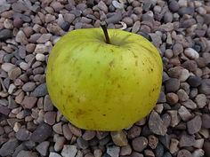 Chorley Vicarage apple.jpg