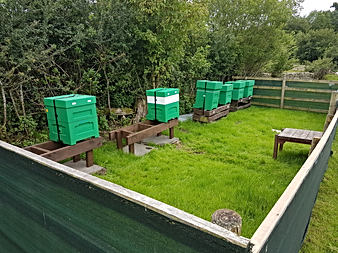 Double the Apiary